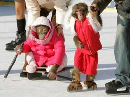 Monkeys On Ice