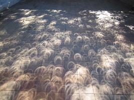 Eclipse pattern on ground